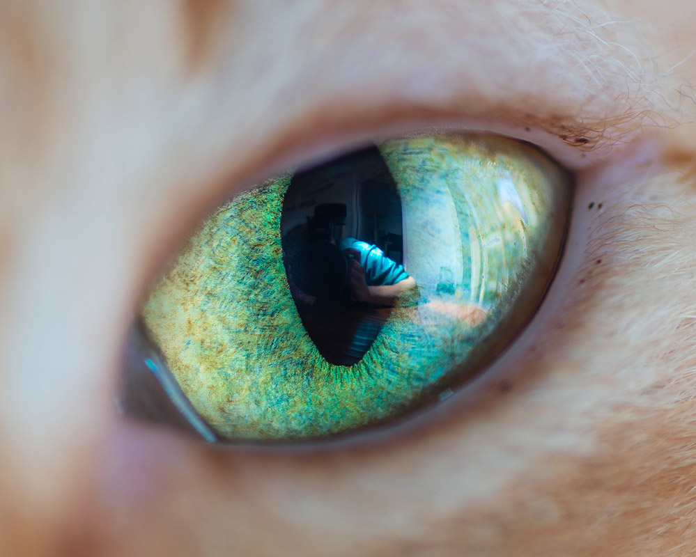 Macro Shots of Cat Eyes by Andrew Marttila 77 Fantastical Macro Shots ...