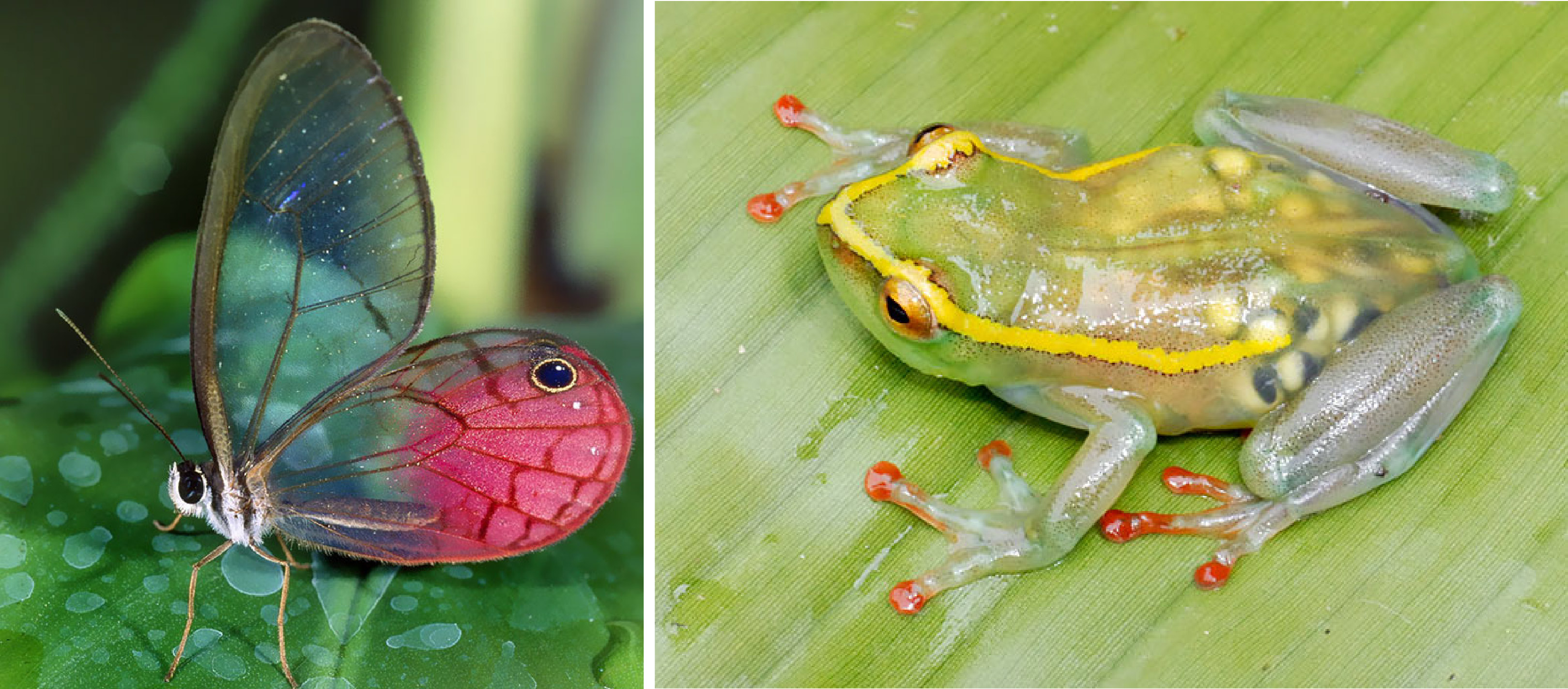 10+ Beautiful Transparent Animals That Are Hard To Believe Actually Exist