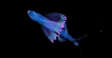 Luminous Plankton Captured in the Dark Waters of the Osezaki Sea
