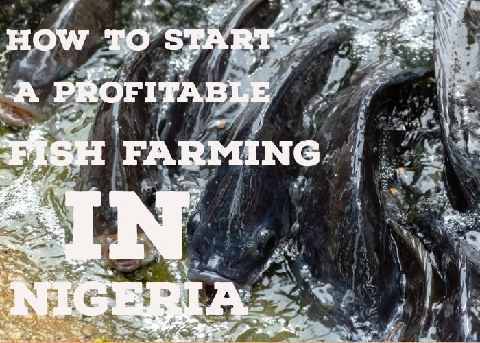 How To Start A Profitable Fish Farm In Nigeria
