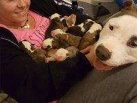 dog-gives-11-puppies-foster-mom-2