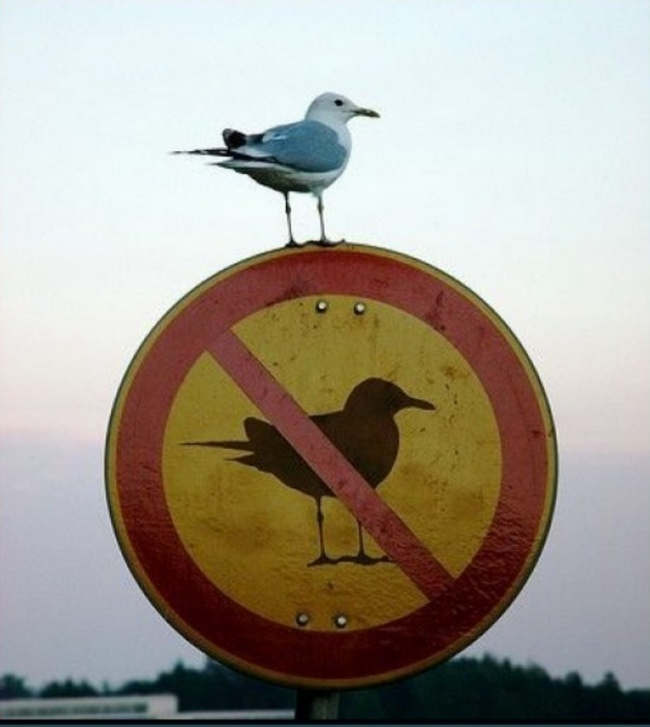 rightMoment-image-seagull