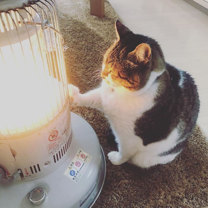 Cat-Falling-In-Love-With-A-Heater-During-Cold-Weather-9Mood-2