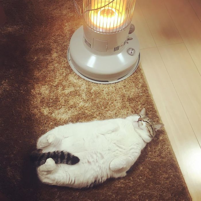 Cat-Falling-In-Love-With-A-Heater-During-Cold-Weather-9Mood-9