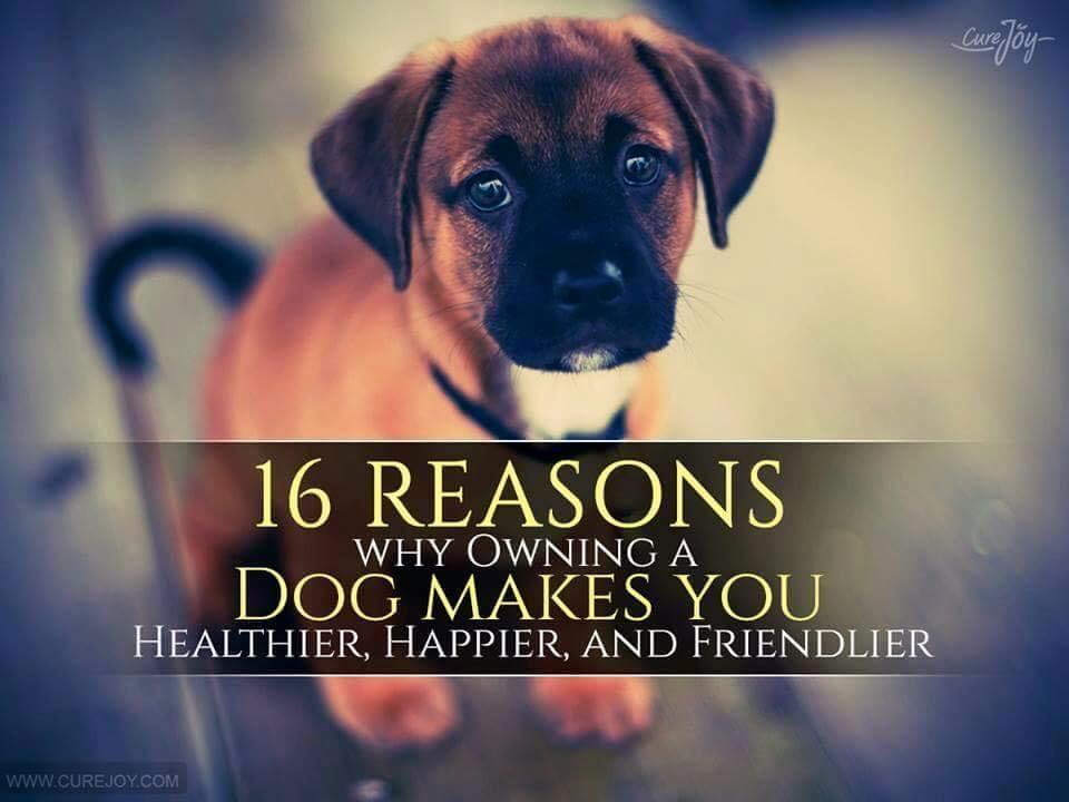 16_reason_why_owning_a_dog_makes_you_Healthier_9Mood_main