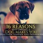 16_reason_why_owning_a_dog_makes_you_Healthier_9Mood_main