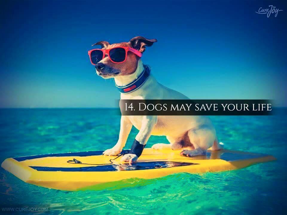 Reason-14-Dogs-May-Save-Your-Life-via-9Mood