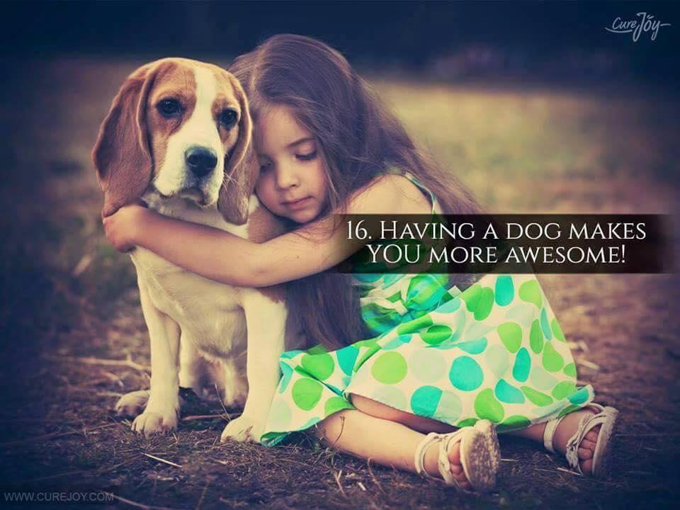 Reason-16-Having-A-Dog-Makes-You-More-Awesome-via-9Mood
