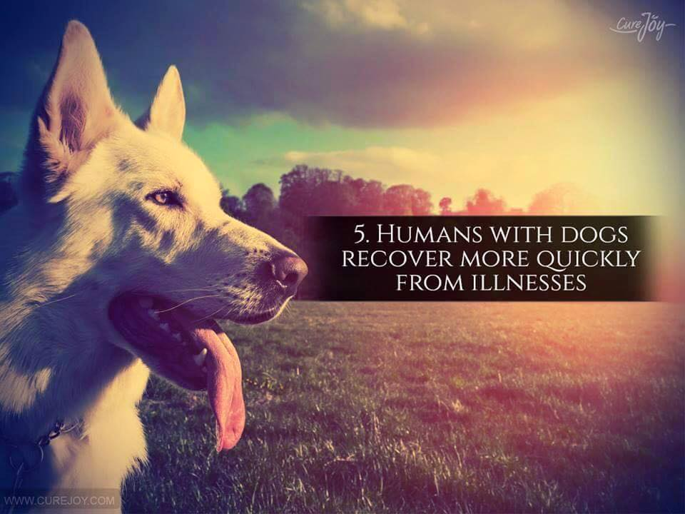 Reason-5-Humans-With-Dog-Recover-More-Quickly-From-Illnesses-via-9Mood