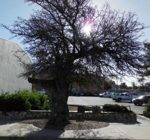 The Hanging Tree is across the street from the hotel. Cowboy ghosts only need cross the street to haunt hotel guests.