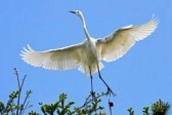 Don't regret. Think egret instead.