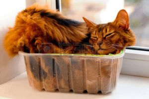 This cat refuses to sleep in a pet bed, preferring the plastic container.