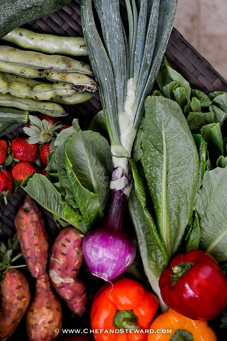greenheart-organic-farms-dubai-uae-farm-tour-18.jpg
