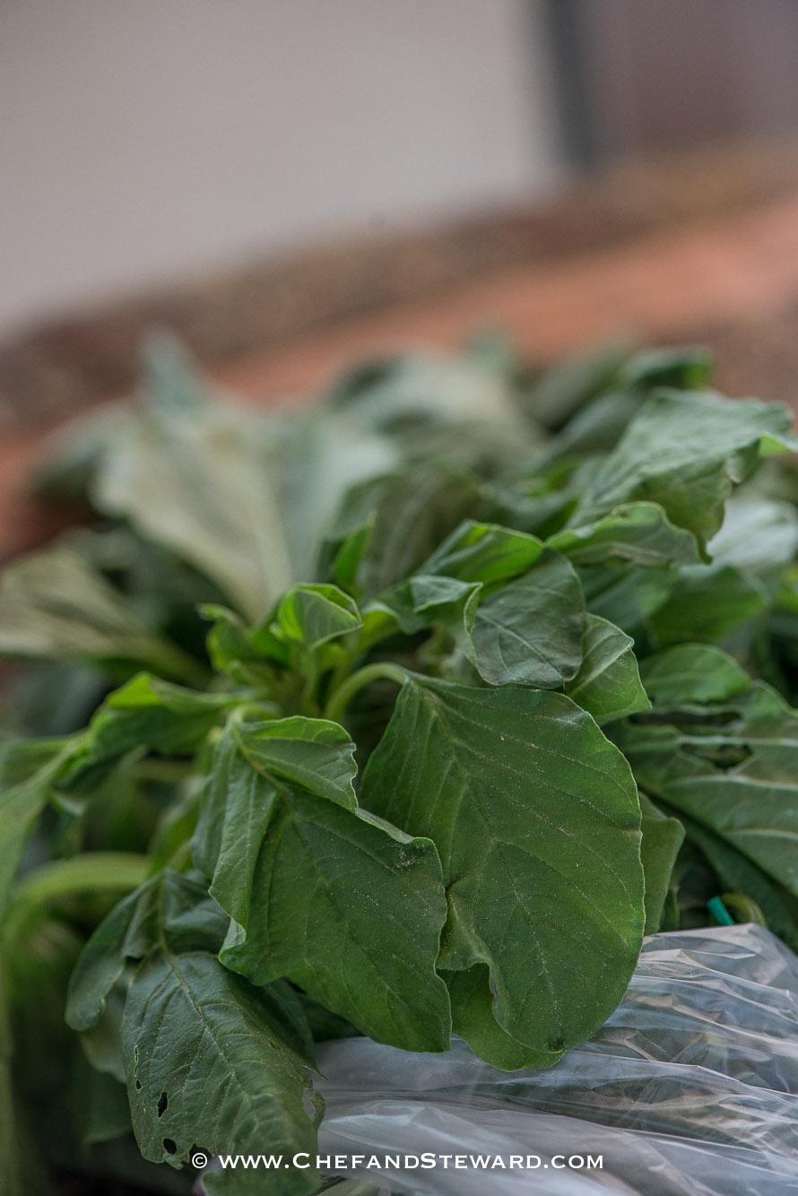 Jamaican Calaloo leaves
