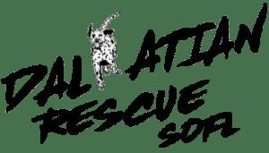 Dalmatian Rescue South Florida