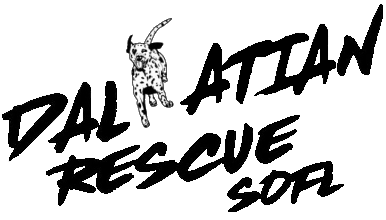 Dalmatian Rescue South Florida