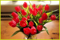 bos tulpen op tafel