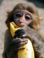 Aap pelt banaan
