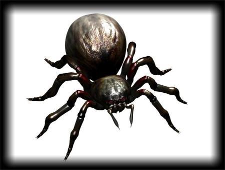Leighton's 3D Spider