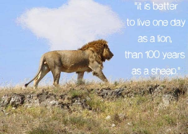 It is Better to Live 1 Day as a Lion than 1,000 Days as a Lamb!