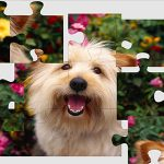 Hund Puzzle