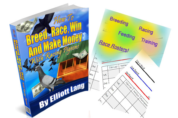 how to race pigeons ebook