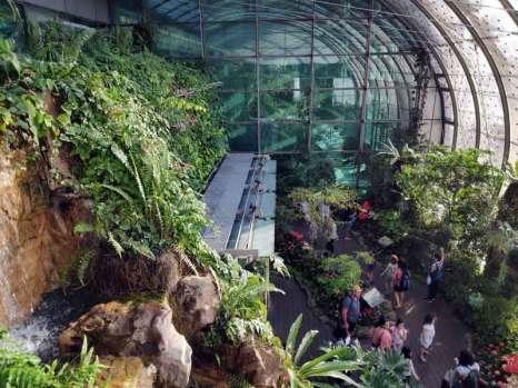 butterfly garden park Singapore Changi Airport