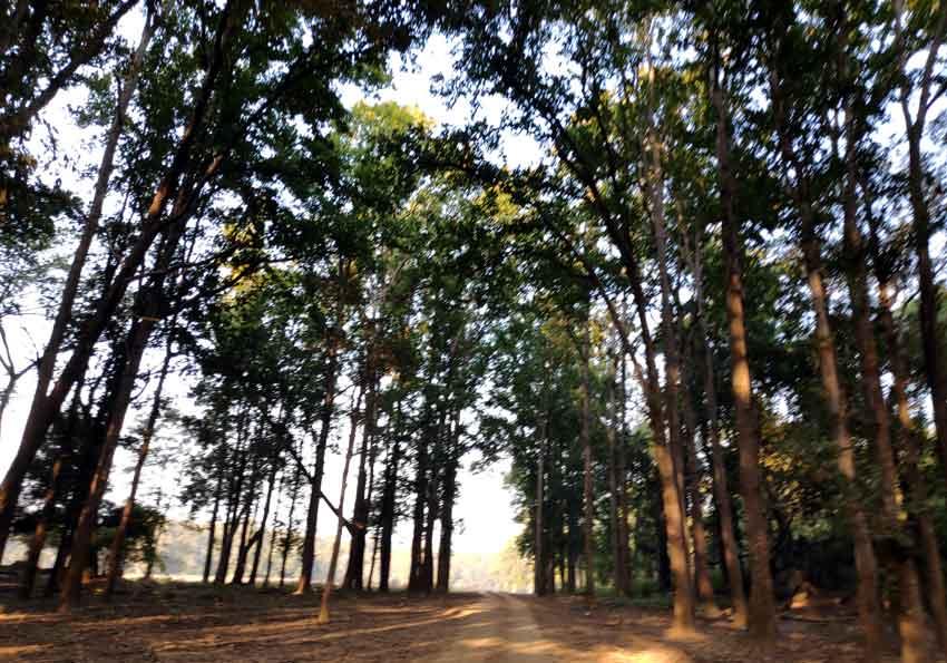 kanha national park tiger wild life safari laid back traveller