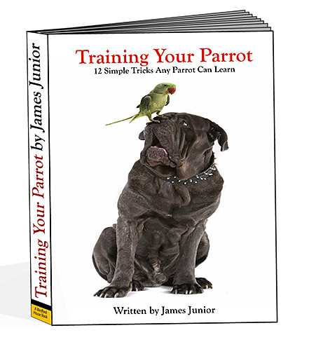 Training Your Parrot: 12 Simple Tricks Any Parrot Can Learn!