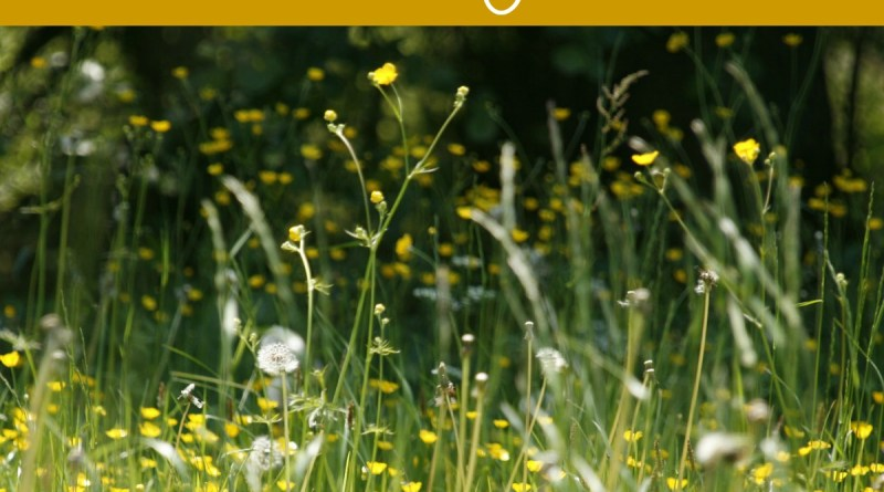Seasonal Allergies: What to avoid during fall and how to get relief!