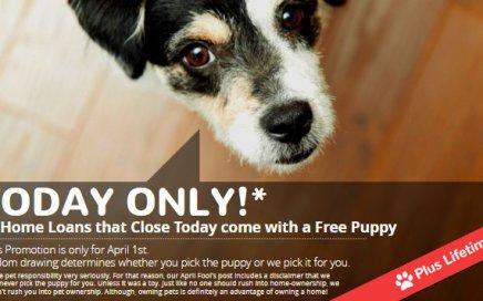April Fools Day Puppy