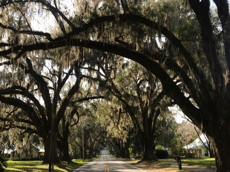 Avenue of the Oaks in Floral City FL