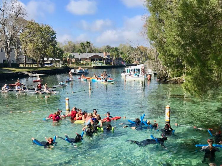 Looking for manatees at the Three Sisters Springs Refuge in Crystal River