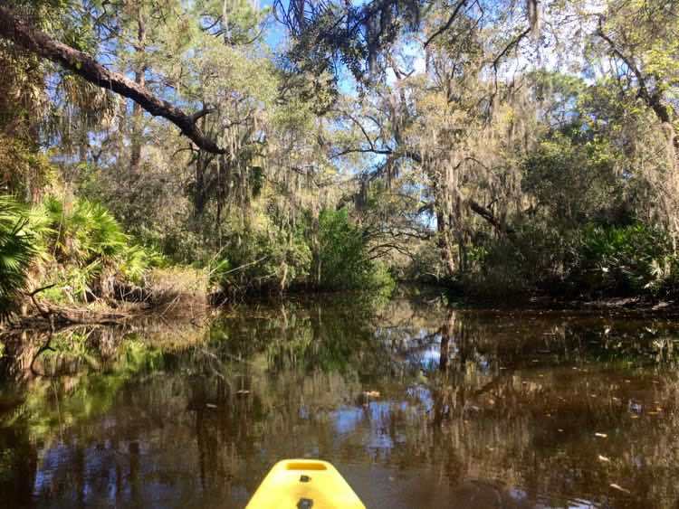 kayaking Oscar Scherer State Park