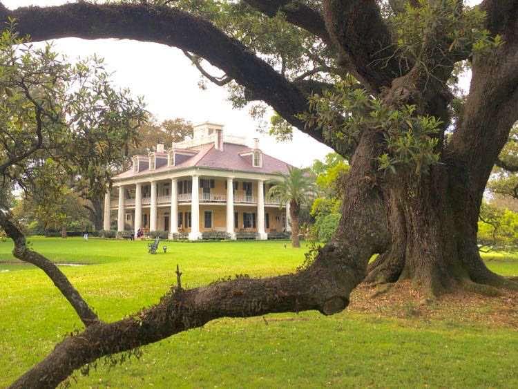 see the glorious oaks and Houmas House Plantation Louisiana