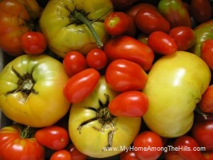 different types of tomatoes!