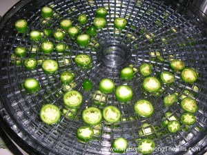 Drying jalapenos