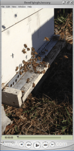 Movie of bees flying near hive