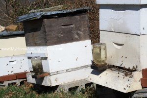 Activity at a few of the hives