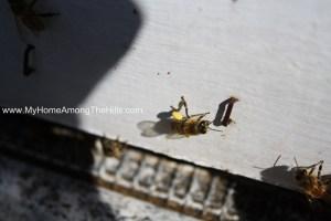 Close-up of honeybees