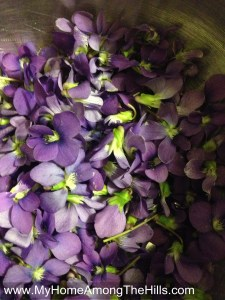 Wild violet blossoms for jelly