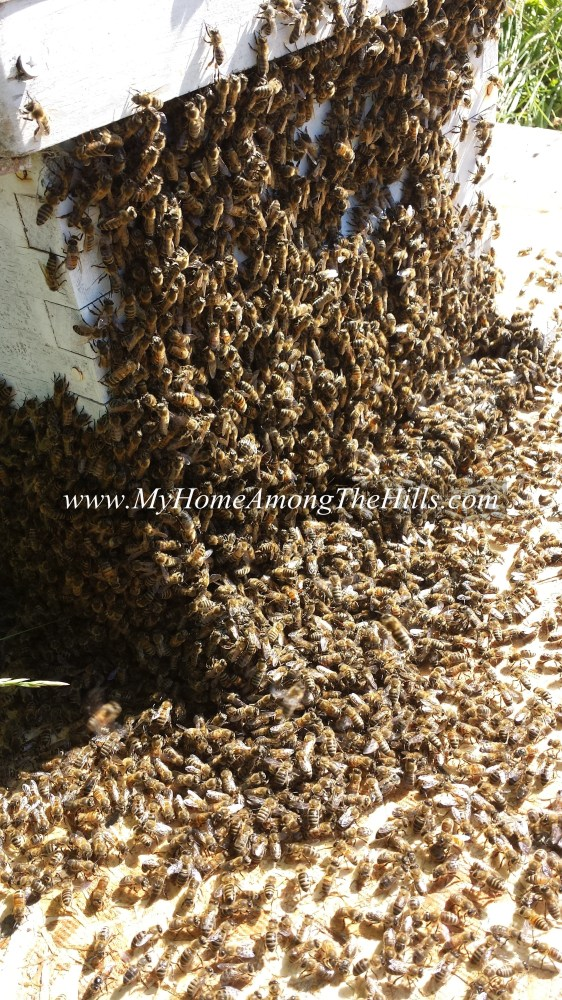 Swarm in the hive box