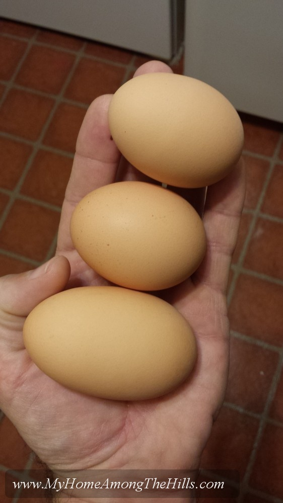 All sizes of eggs
