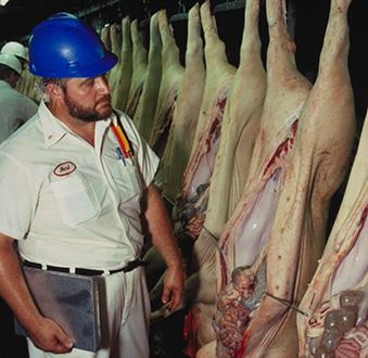 Schweine Inspektion