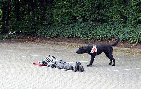 wpid-468DRK-Hunde-fit-fuer-den-Ernstfall-Sultan-2011-06-20-19-41.jpg
