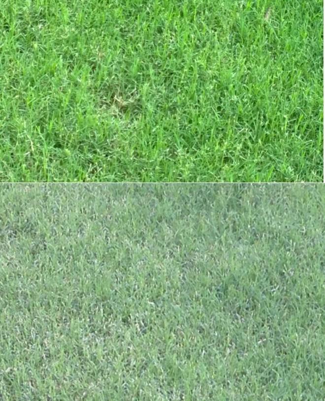 lumia-1020-iphone 5-grass-zoom