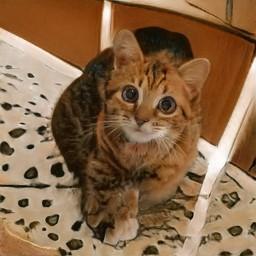 AI cat 1