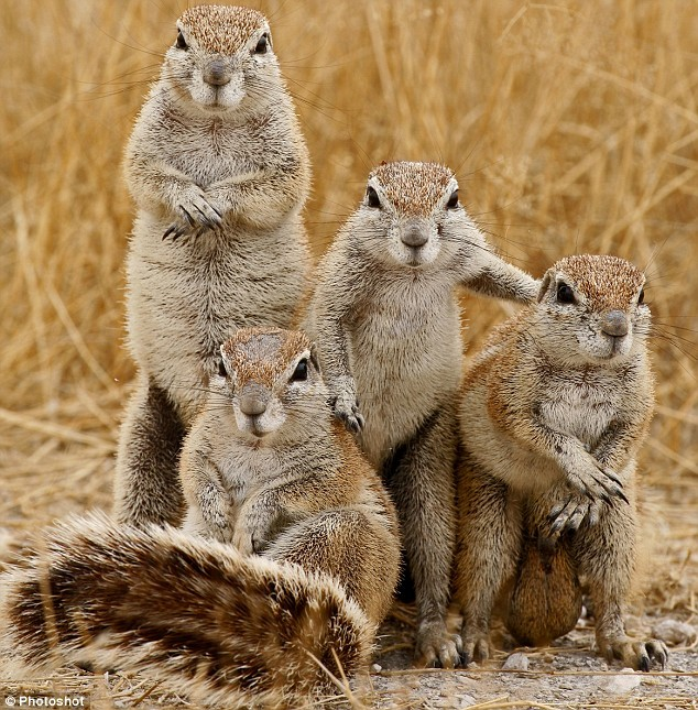 angry Squirrels