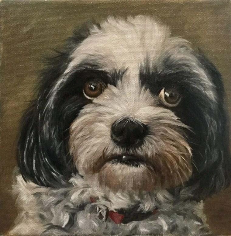 Dog portrait of Rocco