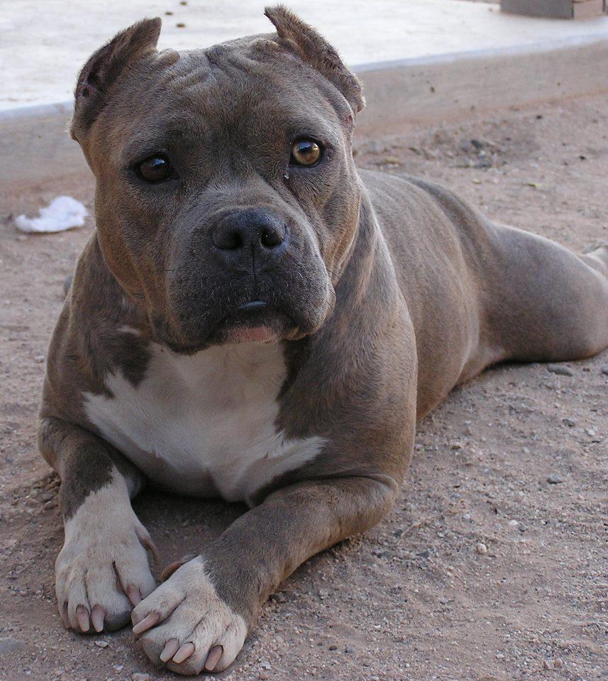 Owner Surrender | Smiling Dog Rescue